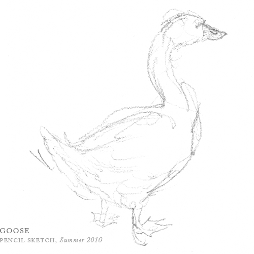Goose by Breezy Brookshire